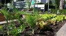 Impressionen von unserem Schulgarten_7